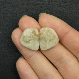 Пара окаменелый коралл 18х15